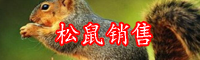 松鼠的养殖技-价格是多少?