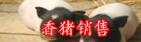农村养殖香猪赚钱吗的?多少钱一只