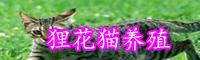 为什么大多数农村都养殖狸花猫?