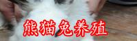 熊猫兔一斤多少钱?养殖技术-