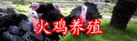 如何人工驯养火鸡-市场行情