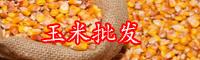 玉米的产地在哪里?如何种植玉米