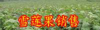 雪莲果的食用价值-种植技术