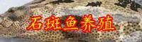 石斑鱼的价格走势-养殖条件