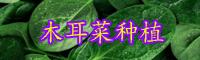 """抗癌防癌蔬菜""""木耳菜""""什么时间种植最好?种植方法有哪些?"""
