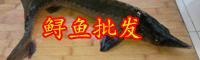 被称为'长江鱼王'的鲟鱼该怎么养殖?