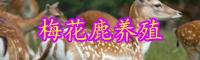 """""""珍稀动物""""梅花鹿养殖方法介绍!"""
