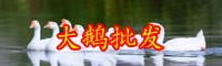 在云南养500只鹅赚多少钱?
