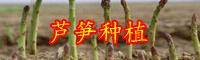 """""""蔬菜之王""""芦笋怎么种植?"""