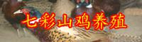 2019年云南七彩山鸡多少钱一斤?养殖前景怎么样?