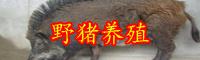 云南猪肉多少钱一斤?养殖猪苗多少钱一头?
