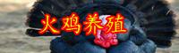 2019年云南火鸡肉价格多少钱一斤?养殖前景如何?