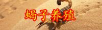 2019年云南蝎子多少钱一斤?它的养殖前景和利润如何?