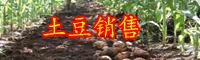 云南土豆别名叫什么?现在价格大概多少钱一斤?