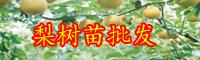 云南梨树苗批发多少钱一棵?什么时候种植?