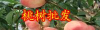 云南一般桃树苗多少钱一棵?什么品种好?