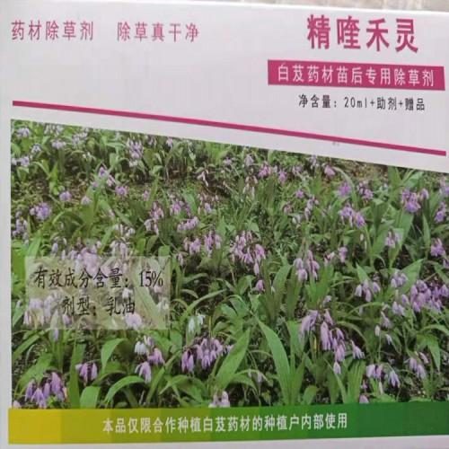 白芨(及)除草剂除草剂使用方法_白芨除草药施药技术
