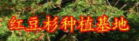 """""""绿色植物熊猫幼崽""""红豆杉种子多少钱一斤?附種子的种植技术!"""