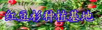 目前市面上红豆杉盆景价格要多少钱一盆?何时剪修?方式 有什么?饲养必须留意啥?