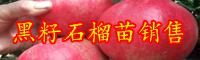 石榴树应当怎样剪修?在哪些时节剪修最好是?——石榴树四季剪修技术性以下