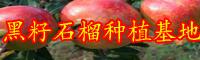 石榴价格行情多少钱一斤?种植前景怎样?