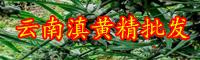 黄精价钱多少钱一斤?种植前景和经济效益如何?