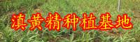 天然的黄精大约多少钱一斤?种一亩大概必须投资成本?
