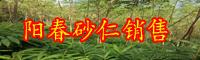 阳春砂仁一亩盈利多少钱?合适在什么地域栽种