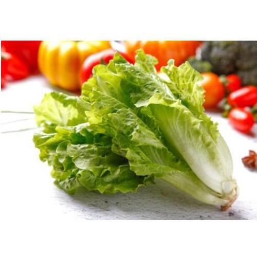 目前生菜价格大概多少钱一斤?农产品批发市场生菜价格