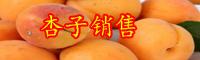 杏子苗哪里买得到?杏子苗哪里有?