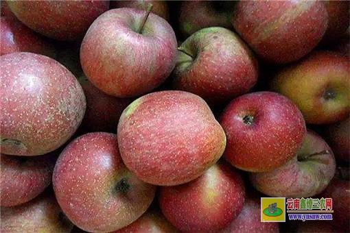 丑苹果产地最出名的在哪
