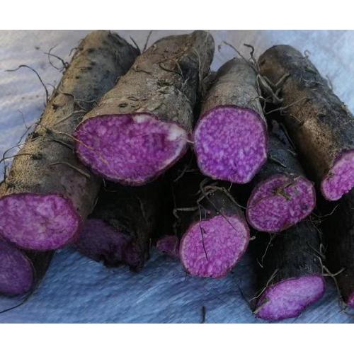 山药的种植时间与高产的管理方法
