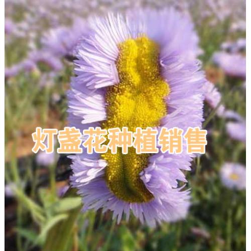 云南云芃生物科技有限公司