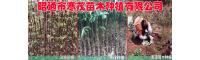 昭通市寒茂苗木种植有限公司产品图片