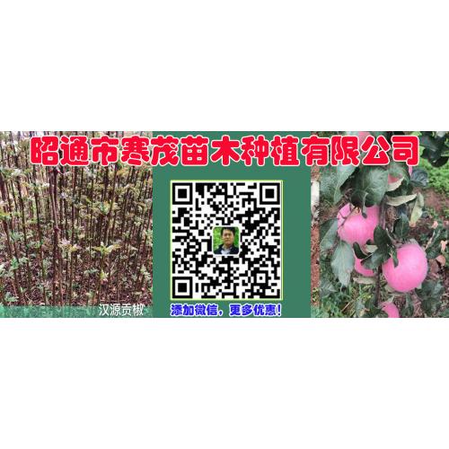 九叶青花椒袋苗,汉源贡椒袋苗
