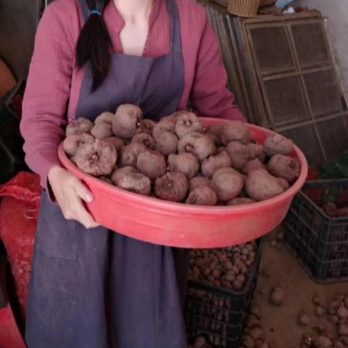 云南和四川种植魔芋哪里多?