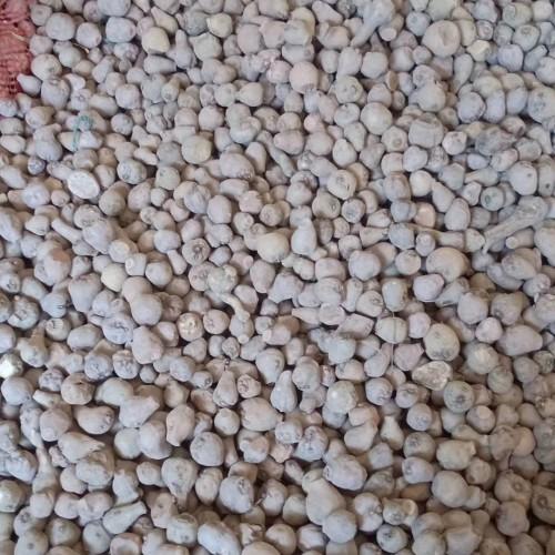 亳州药市魔芋价格行情|魔芋种子价格行情多少钱?