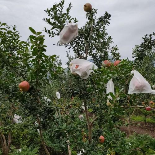 今年石榴价格大概多少钱一斤?附石榴树的栽培技术
