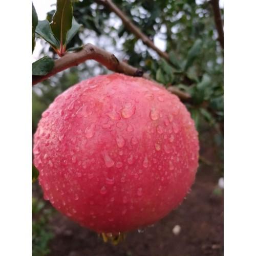 软籽石榴水果成熟图片