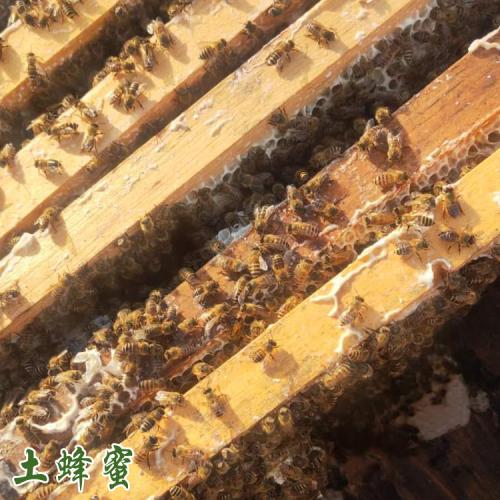 哪里有卖野生蜂蜜 野生蜂蜜一斤多少钱