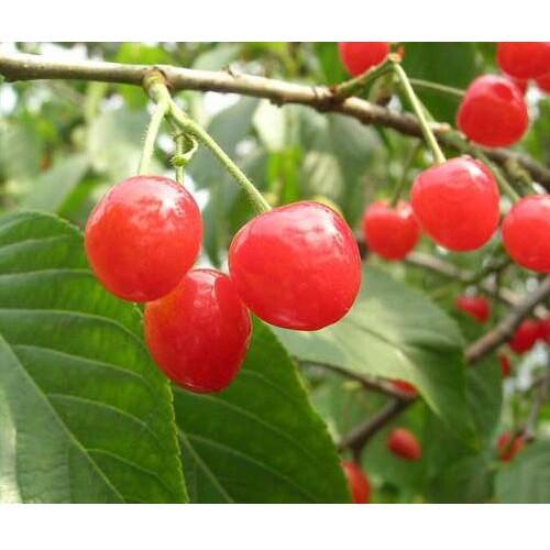 2020年玛瑙多少钱一斤?玛瑙种植前景