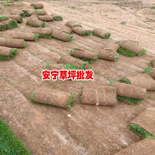 2020年马尼拉草坪(皮)多少钱一平米?马尼拉草坪(皮)种植前景