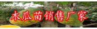 """""""广东岭南果王""""木瓜价钱多少钱一斤?栽种经济效益如何?"""