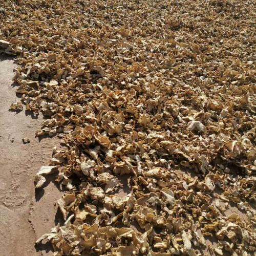 多年生长 木本植物鸡头黄精(参)产于哪儿?一般多少钱一斤?一亩可产多少斤?如何吃?