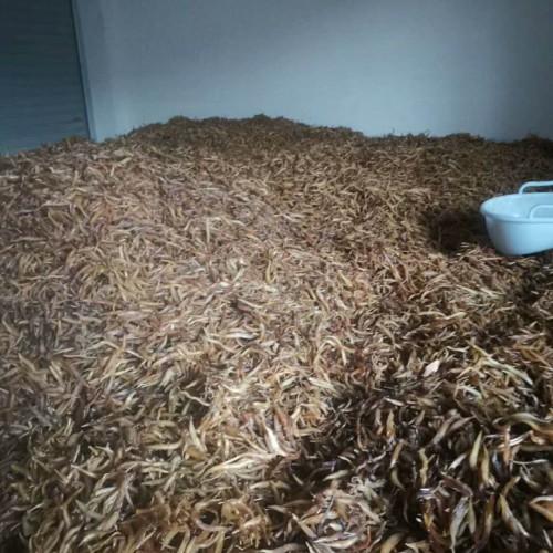 如今天门冬回收多少钱一斤?泡水喝的作用有什么?