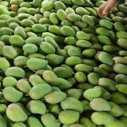 """""""亚热带水果中的王者""""芒果是什么季节的新鲜水果?多少钱一斤?"""
