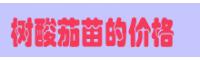 树酸茄价格查询网       云南树酸茄苗批发