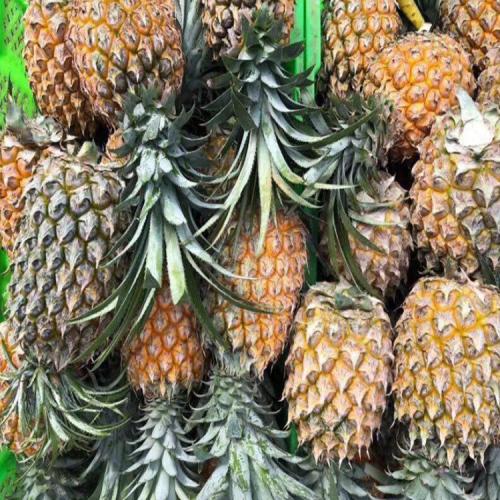 菠萝代办_红河菠萝代办中心