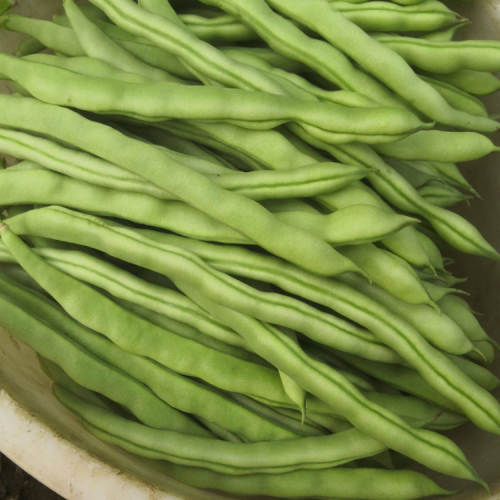 四季豆代办 红河代办四季豆服务(附图)|四季豆代办联系||
