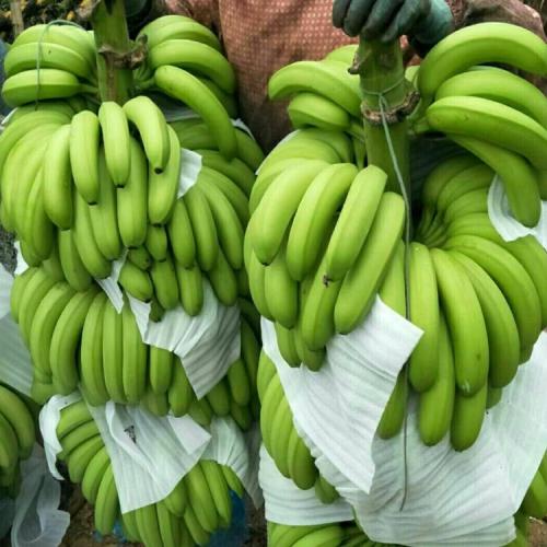 香蕉代办 红河代办香蕉服务(附图)|香蕉代办联系||